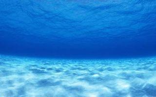 На дне океана найден уникальный организм, способный регенерировать за 3,5 дня