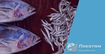 Крупная рыба неидёт на«закормленный стол», или как найти место клёва