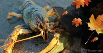 Осенний жор и приманка с душком: Искусство ловли рака ночью раскрыл рыбак