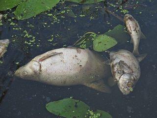 В Костроме в водоеме обнаружили превышение фенола в 45 раз