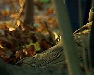 У входа в московский парк «Лосиный остров» найдено тело без ног и рук