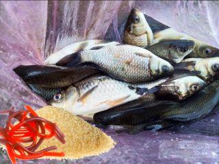 Уловистые червяки из желатина за 15 минут // Изображение: Анастасия Васильева, pokatim.ru