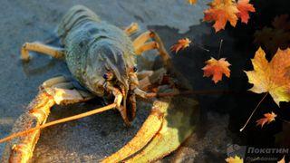 Осенняя рыбалка на раков. Автор изображения Нина Беляева.