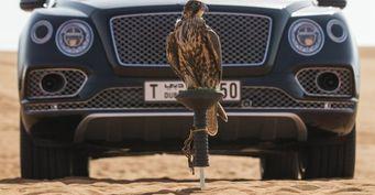 Bentley представил свой автомобиль для соколиной охоты