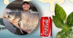 Приманки для толстолоба и карася из Кока-колы и сгущёнки, посоветовали рыбаки