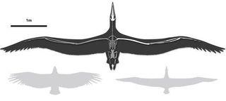 Ученые обнаружили кости самой древней птицы
