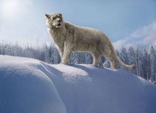 В Якутии нашли останки древнего пещерного льва