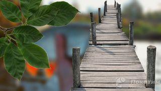 Растения и мосты – где прячется голавль. Автор изображения «Покатим Ру» Нина Беляева.