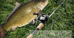 Что взять нафидерную рыбалку впервый раз— советы новичкам