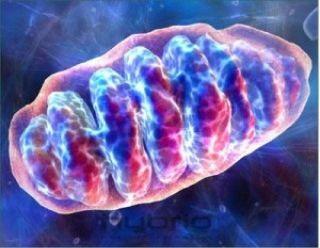 Британский минздрав разрешит модифицировать ДНК новорожденных