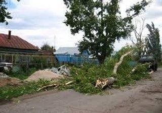 В Самаре упавшие деревья повредили более 70 машин