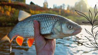 Рыбалка на голавля. Автор изображения «Покатим Ру» Нина Беляева.