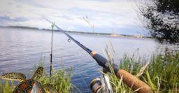 Наживка для леща из корма для черепах, рецептом поделился рыбак