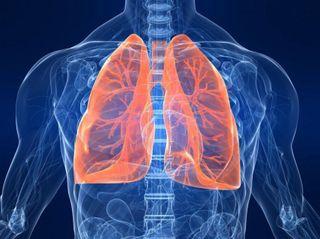 В Японии учёные научились выращивать лёгочные альвеолы из стволовых клеток