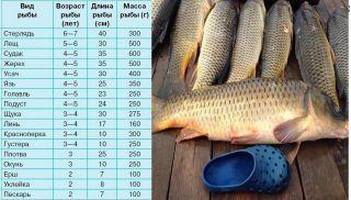 Таблица посоотношению веса ироста рыбы