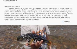 Даже держать фугу в руках опасно для жизни. Источник изображения: vestiprim.ru