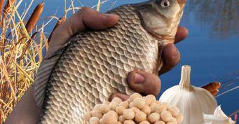 «Закуска» для карася: Рецепт уловистой прикормки из арахиса в глазури и чеснока