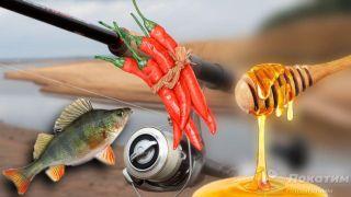 Ароматизаторы и приманка на судака: окунь, перец Чили и мед. Автор изображения «Покатим Ру» Нина Беляева.