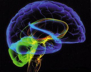 Ученые: Человек часто совершает ошибки из-за «фоновых шумов» мозга