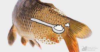 Карпу - гадость, карасю в радость: Какие вкусы очаруют мирных рыб, рассказали ученые
