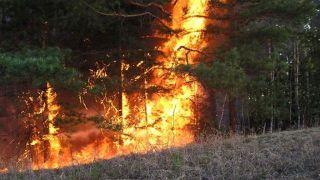 На Куршской косе пожар локализован, но тушиться будет всю ночь