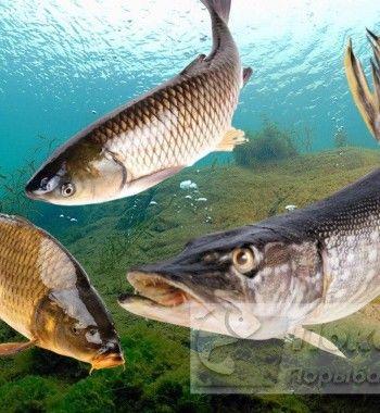 Топ-3 трофейной рыбы, которую поймали рыбаки в 2020 году