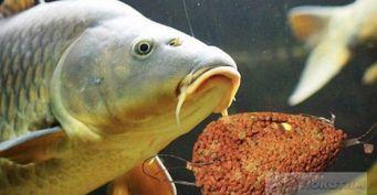 Рыбалка фидером на флэт: 3 правила помогут поймать трофейного карпа