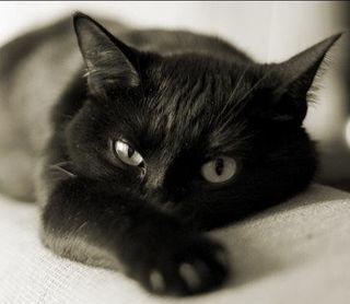 В Великобритании кошка заразила своих хозяев туберкулезом