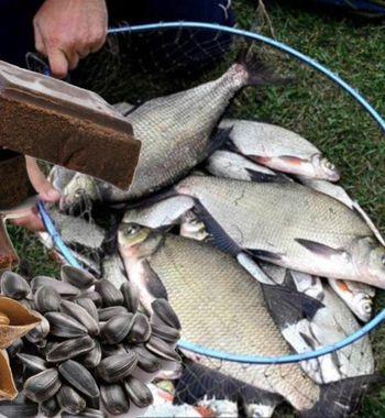 4 бюджетных активатора для ловли леща осенью