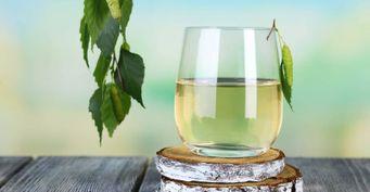 Навкус как вСССР: Готовим напиток «Берёзовый сок»