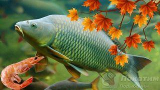 Осенняя рыбалка накарпа. Автор изображения «Покатим Ру» Нина Беляева.