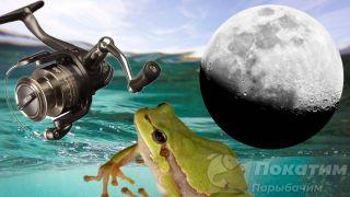 Советы, которые помогут поймать щуку: безынерционная катушка, ночь, лягушка. Автор изображения «Покатим Ру» Нина Беляева.
