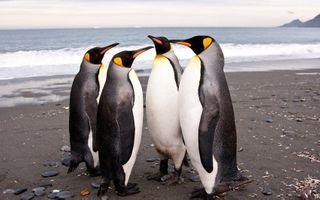 Ученые обнаружили в Антарктиде останки гигантского пингвина