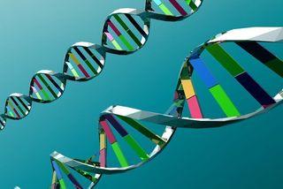Ученые доказали, что лучшие друзья имеют общие гены