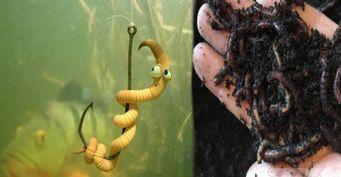 Имитируя шум дождя: «Заморский» способ выманивания червей для рыбалки