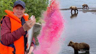 Евгений Миронов порыбачил с медведями. Автор изображения Нина Беляева.