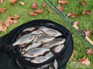 Даже осенью можно рассчитывать на большой улов. Изображение: Елена Лановая