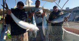 Морской троллинг для новичков. Как не остаться без улова и поймать лакедру, рассказал рыбак