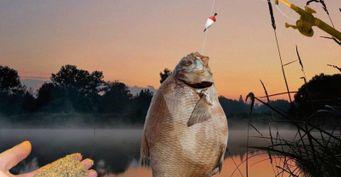 Активные поклёвки без каш: Секреты ночной ловли леща