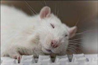 Ученые доказали,что сон после учебы улучшает запоминание материала