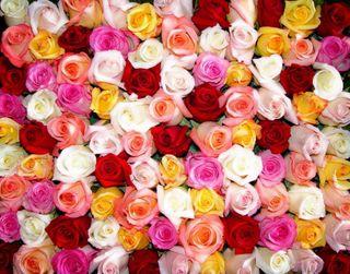 В Пензе открылся филиал службы доставки цветов Flowers-Sib.ru