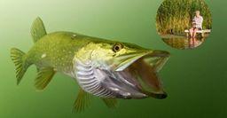 Рыбалка на щуку в июле: хитрости, о которых знают только самые заядлые рыбаки