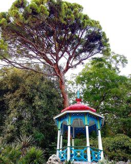 Никитский сад порадует растениями совсего мира