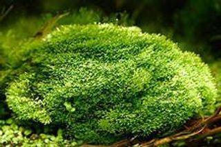Учёные «вдохнули жизнь» в мох, замороженный 1 500 лет назад