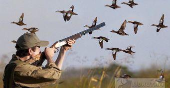 Намедведя всигнальном жилете идругие изменения в законе об охоте в2021