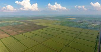Животные гибнут, а на земле ничего не растет. Россия передает Китаю под сельхозугодья около 10 миллионов гектар