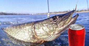 Самодельная блесна за копейки из банки газировки для хищной рыбы